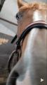 horsefutur