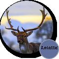 lolette50