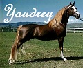 yaudrey