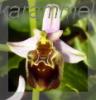 karammel