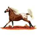 Cheval de selle Appaloosa Spotted Palomino
