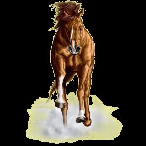 Cheval de selle Trotteur Français Alezan Brûlé
