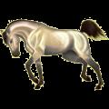 Cheval de selle Arabe Aubère