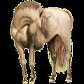 Cheval de selle Hanovrien Bai Cerise