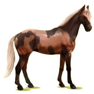 Cheval de selle Anglo-Arabe Isabelle