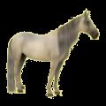 Cheval de selle Paint Horse Pie Tobiano Alezan Brûlé