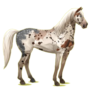 Cheval de selle Mustang Isabelle