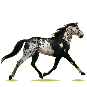 Cheval de selle Trotteur Français Bai Brûlé