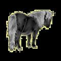Poney Shetland Alezan