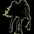 Cheval de selle Hanovrien Bai Brûlé