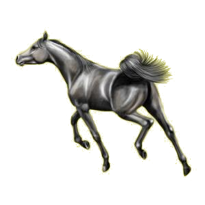 Cheval de selle Arabe Gris Souris