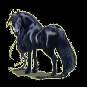 Cheval de selle Frison Noir