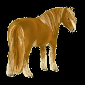 Poney Connemara Aubère