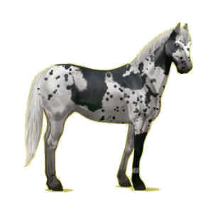 Cheval de selle Paint Horse Pie Alezan Overo