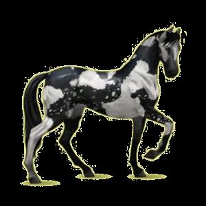Cheval de selle Akhal-Téké Bai Brûlé