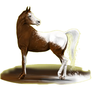 Cheval de selle Anglo-Arabe Gris Clair