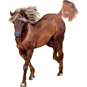 Pégase Quarter Horse Bai