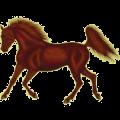 Cheval de selle Quarter Horse Alezan