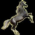 Cheval de selle Quarter Horse Bai Brûlé