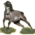 Pégase de selle Quarter Horse Bai