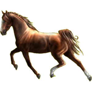 Cheval de selle Quarter Horse Bai Cerise