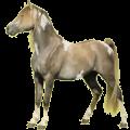 Cheval de selle Paint Horse Pie Tobiano Alezan
