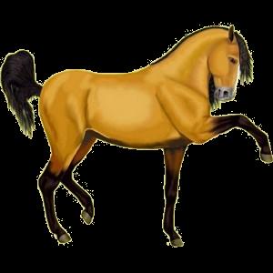 Poney Français de Selle Alezan Brûlé