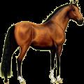Cheval de selle Quarter Horse Aubère