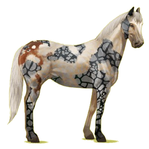 Cheval de selle Quarter Horse Bai