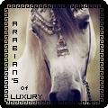 ❤ arabian's of luxury ❤