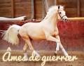 âмeѕ de poney