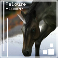 pαlouse flower