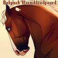 belgisch warmbloedpaard