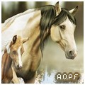 american qp foundation