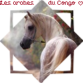 ~les arabes du congo~