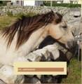 poneycorne