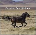 • l'étalon des plaines •