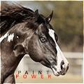 ☼ paint power ☼