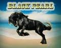 of black pearl