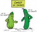 courgette attitude ~