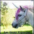 les roses piquantes