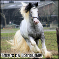 tinker de cornouaille