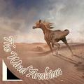 The Wind Arabian °ʳᵉᶜʳᵘᵗᵉ