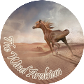 The Wind Arabian °ʳᵉᶜʳᵘᵗᵉ