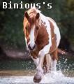 binious's quarter horses