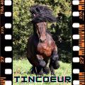 tincœur