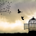 caged bird learnt to fly