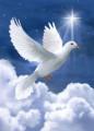 la colombe blanche