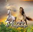 les poneys de longchamps