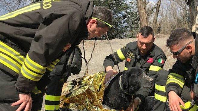 Arezzo, malore fatale mentre cammina in campagna: il suo cane gli resta accanto tutta la notte